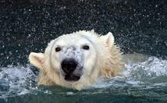 Splish splash I was taken a bath!