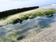 Groyne and seaweed - by temporalata