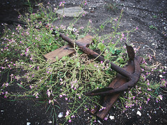 anchor and flowers (washako16) Tags: flower beach grass sand rust anchor