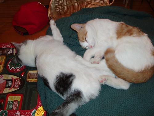 Post-Christmas naps