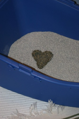 Cat leaving a message in the litter tray