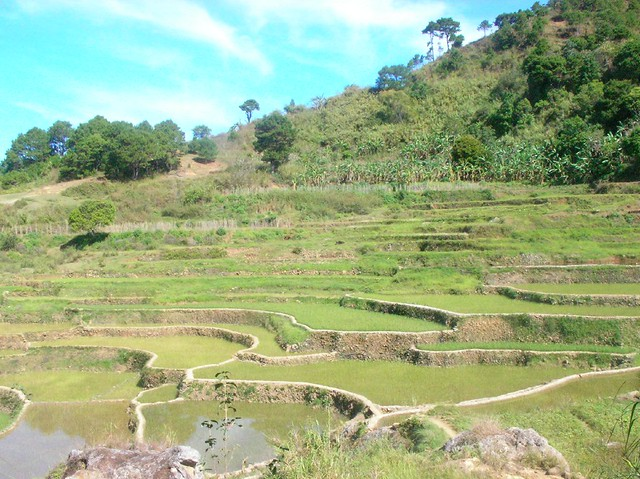 kayan rice terraces
