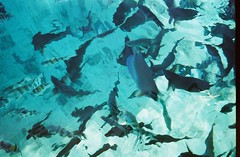 Frenzy of Fish (melanie.phung) Tags: vacation fish animals underwater melaniephung