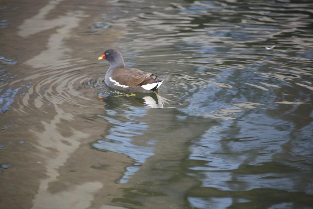 BIRD ON CANAL