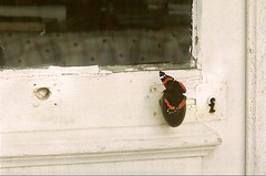 la visite de l' amiral ........ (pierreguillien) Tags: door butterfly lock visit papillon porte visite serrure corvol
