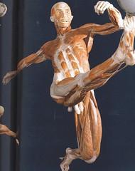 2006-3-27-Body worlds 2 exibit at the Denver Museum (18) (1) (graysonfamily) Tags: 2 museum weird pics body denver worlds corpse bizarre bodies plastination plastinated specialinterest exibit madeyoulook httpwwwmyspacecomepigee