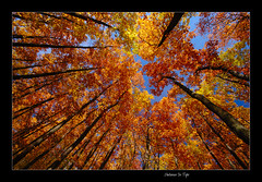 Autumn In Tops (RetBaron) Tags: wood autumn trees red fall les bravo czech 10 quality wide wideangle 1020mm tops bohemia redbaron podzim karltejn sigma1020mm 10mm stromy superwide sigma1020 echy specnature abigfave retbaron superbmasterpiece diamondclassphotographer flickrdiamond thegoldenmermaid top20autumn bestofautumn top20autumn20