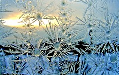 Ice flowers bloom (marika_te) Tags: winter cold macro ice window nature mrjackfrost frost natural latvia latvian iceflower iceflowers magicdonkey marikate p1f1 superaplus aplusphoto