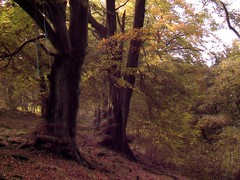 Elderslie Tree with a little infrared (paddimir) Tags: trees tree golf ir scotland renfrewshire elderslie