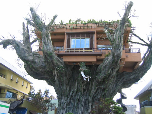 A treehouse in Okinawa, Japan