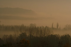 Brouillard (micdel) Tags: morning autumn birds fog automne geotagged arbres swamps marais brouillard brume oiseaux matin poplars populus peupliers lavours geolat45801700 geolon5739713