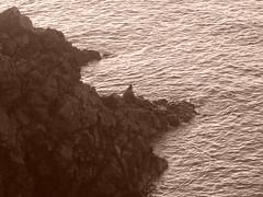 Chi dorme non piglia pesci... (ryanbecker12) Tags: sea italy fish water landscape seaside fisherman rocks solitude mare uomo pesci rocce acqua pesca pescatore lonelyness scogli scogliera seppia solitudine piombino