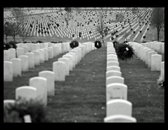 Veterans Day (Bo Darville) Tags: bw cemetery minnesota canon eos 50mm you minneapolis thank national veterans 30d fortsnelling