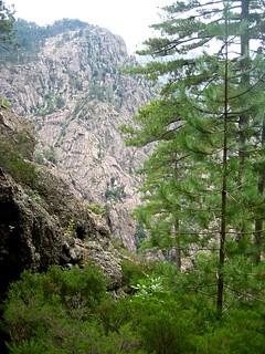Végétation du couloir de Tana a l'Orsu