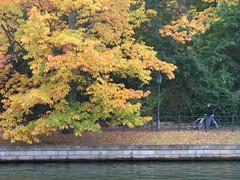 IMG_3010 Autumn Colours, Berlin (globalNix) Tags: autumn berlin fall gemany