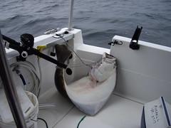 HogTied (nicholasporr) Tags: halibut hogtied