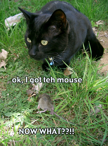 teh mouse