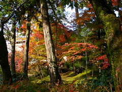 Kyoto (HerryLawford) Tags: autumn trees red green yellow japan temple maple kyoto colours