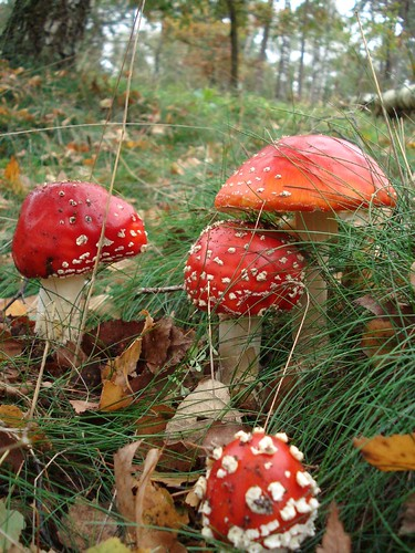 types of poisonous mushrooms - group picture, image by tag ...