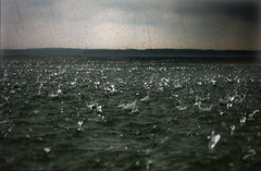 Heavy rain (Stefan Sderstrm) Tags: sea nature topf25 water rain weather clouds finland droplets drops dive baltic climatechange climate archipelago downpour darksky heavyrain surfice anawesomeshot landislands