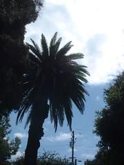DSCF0046.JPG (ardella) Tags: park 2004 alvarado sanpabloca
