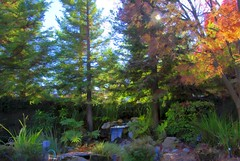 My Backyard (Tonym1) Tags: trees green fall