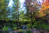 My Backyard (Tonym1) Tags: trees green fall