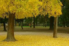 Sotto l'albero:...c'è un tappeto giallo