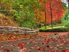 Winding ways of autumn (HDR) (EugeniusD80) Tags: road park autumn trees red orange color green fall colors yellow japan maple momiji nagoya 4autumn hdr photomatix tthdr subtlehdr