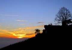 Silhouetted neighbors (oobwoodman) Tags: switzerland suisse schweiz lakegeneva lake lman leman genfersee grandvaux sunset sundown couchedesoleil sonnenuntergang vaud vineyards vignoble vigne vignes vin rebe tree arbre baum winter hiver silhouette