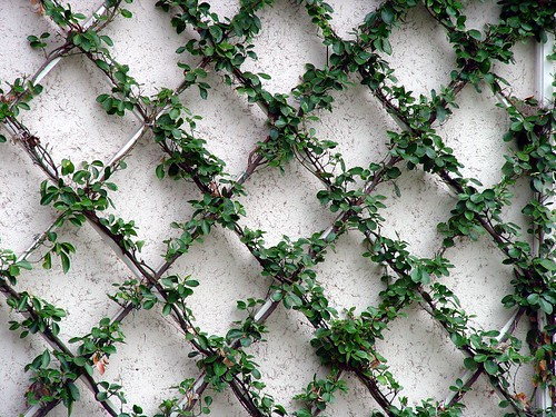 Amazoncom  ColourTree Expandable Faux Artificial Ivy