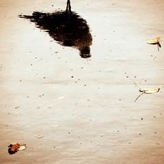 582 (s▲ul gm) Tags: autumn reflection wet water hojas agua seagull ground reflejo otoño gaviota suelo mojado lluvioso interestingness225 p1f1 ltytr2 ltytr1 ltytr3
