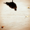 582 (saul gm) Tags: autumn reflection wet water hojas agua seagull ground reflejo otoño gaviota suelo mojado lluvioso interestingness225 p1f1 ltytr2 ltytr1 ltytr3