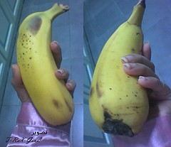 هذه مب باذنجانة صفرة....هذه موزة عملاقة - large banana (Shaima82_4) Tags: fruit big hand large banana eat