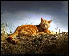 El Príncipe de los Gatos