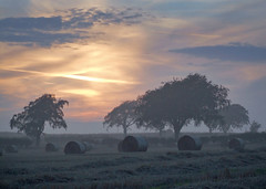 Foggy sunset (Viche) Tags: trees sunset fog scotland bravo fife harvest foggy slide bales fp 4a interestingness4 magicdonkey