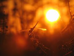 Dragon at Sunset (Sean McCann (ibycter.com)) Tags: sunsets20060923 impressedbeauty