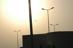 Flying Home (kit_mal) Tags: pakistan sunset bird flying nikon d70s lahore kitmal