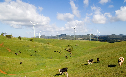 IMGP2045 wind farm and cows