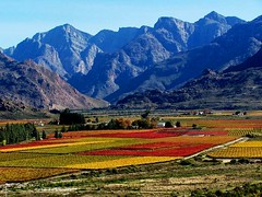 Autumn in South Africa (geoftheref) Tags: africa travel autumn orange mountains color colour catchycolors de landscape la landscapes town interestingness interesting flickr do 5 south vivid paisaje 100v10f du paisagem safari cape afrika fav paysage landschaft grape sdafrika sul paesaggio sud landschap grapevines kaapstad  sudafrica frica lafrique zuidafrika specland  geoftheref dellafrica   surfrica   naturewatcher afrikasafari