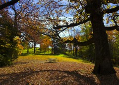 Autumn Colors (oldsamovar) Tags: searchthebest gtaggroup