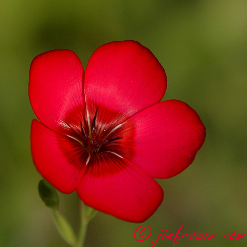 Very Red Flower