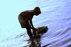 cuci (Farl) Tags: travel bali man seaweed industry colors sunrise indonesia violet farmer washing cultivation nusadua agronomy cottonii carrageenan mariculture kappaphycusalvarezii geger