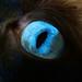 Lias Blue