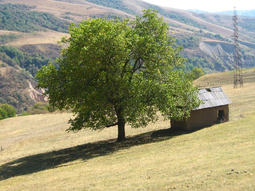 Shed under tree in valley after Kaldama Pass, Kyrgyzstan / 木の下の小谷(カルダマ峠のあと、キルギス)