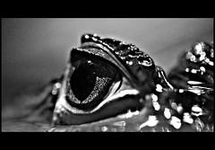 Crocodile tears (Frk Kristine) Tags: tag3 taggedout tag2 tag1 kiss2 kiss3 kiss1 kiss4 kiss5