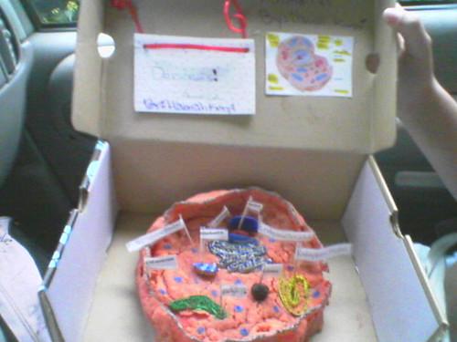animal cell 7th grade