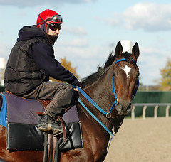 Curious (Rock and Racehorses) Tags: october belmont thoroughbred gallop racehorses breederscup