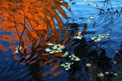 Fire & Water (Mark_H) Tags: seattle park morning blue autumn red reflection fall water leaves catchycolors pond ripples topten 4seasons