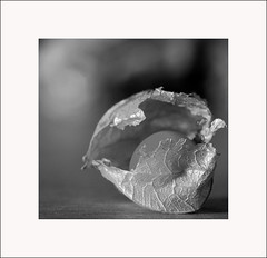 breakthrough (Funny Fish) Tags: autumn bw macro fruit yummy close skin framed shell thin breaking